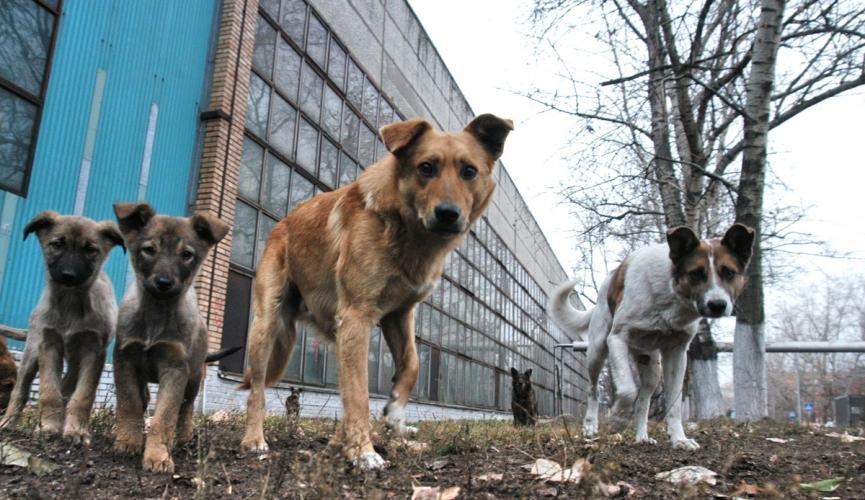 Жизнь недомашних животных Северодонецка: простые способы помочь бездомным собакам и кошкам пережить осень, фото-2