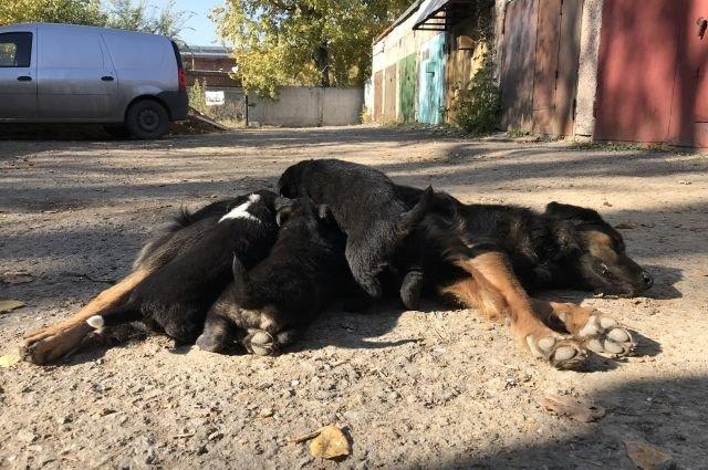 Жизнь недомашних животных Северодонецка: простые способы помочь бездомным собакам и кошкам пережить осень, фото-1