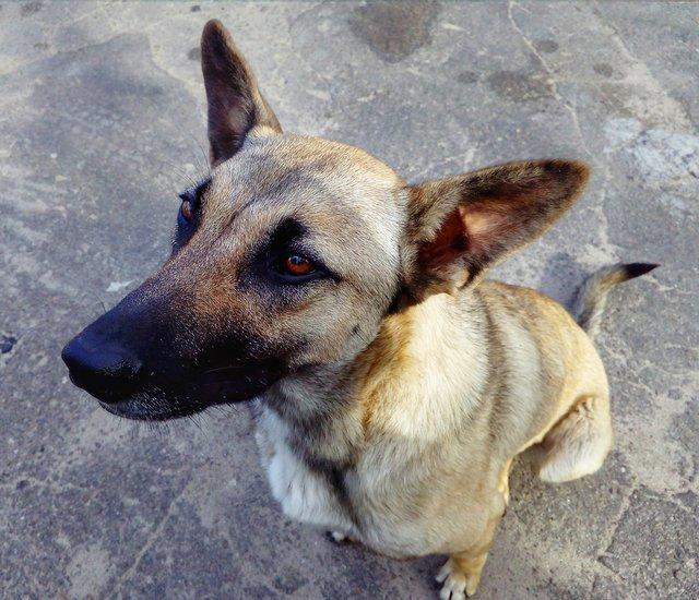 Жизнь недомашних животных Северодонецка: простые способы помочь бездомным собакам и кошкам пережить осень, фото-8