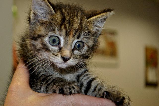 Жизнь недомашних животных Северодонецка: простые способы помочь бездомным собакам и кошкам пережить осень, фото-9