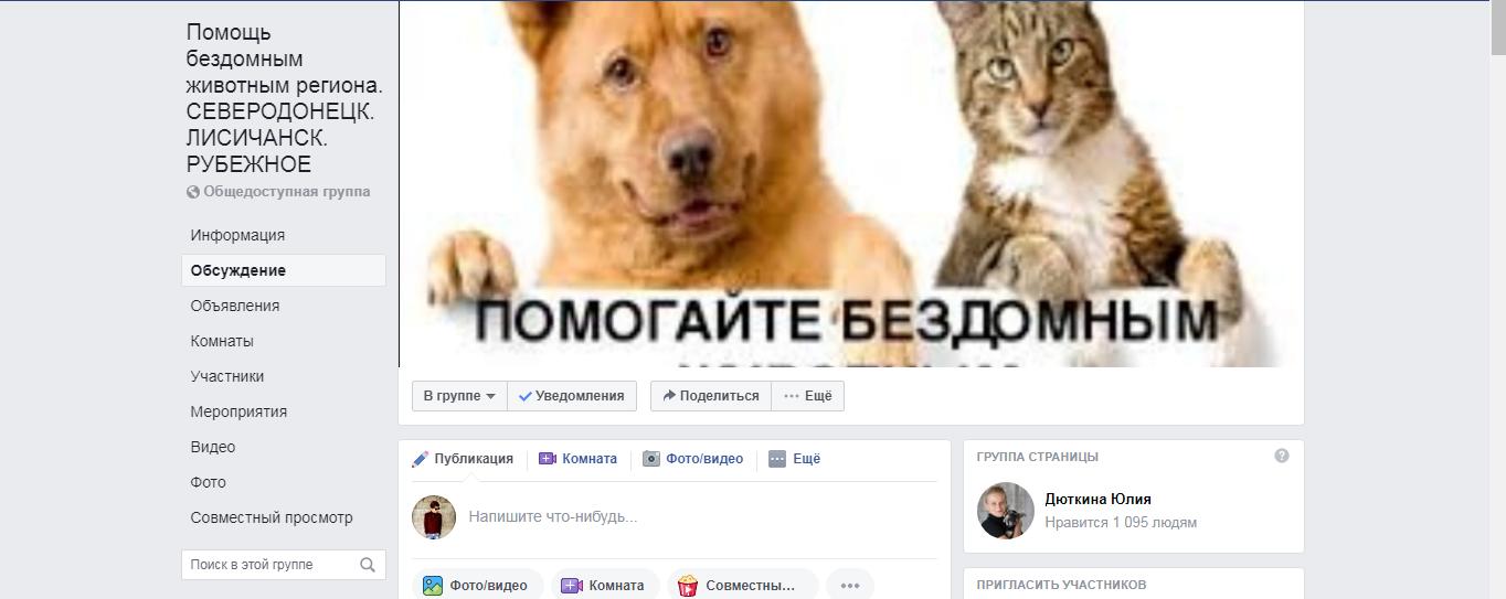 Жизнь недомашних животных Северодонецка: простые способы помочь бездомным собакам и кошкам пережить осень, фото-5
