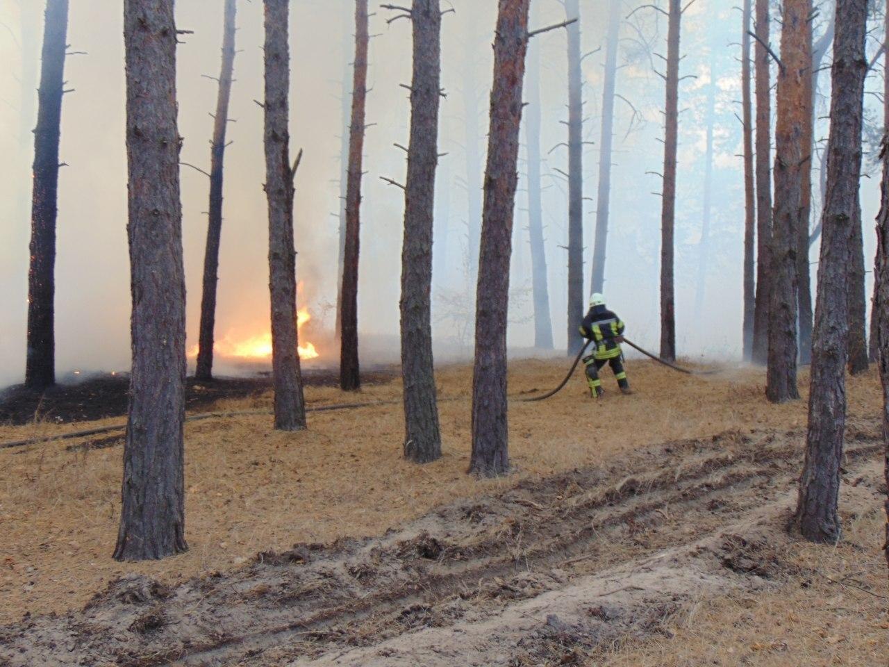 Лесной пожар под Северодонецком: спасатели эвакуируют жителей сел , фото-1