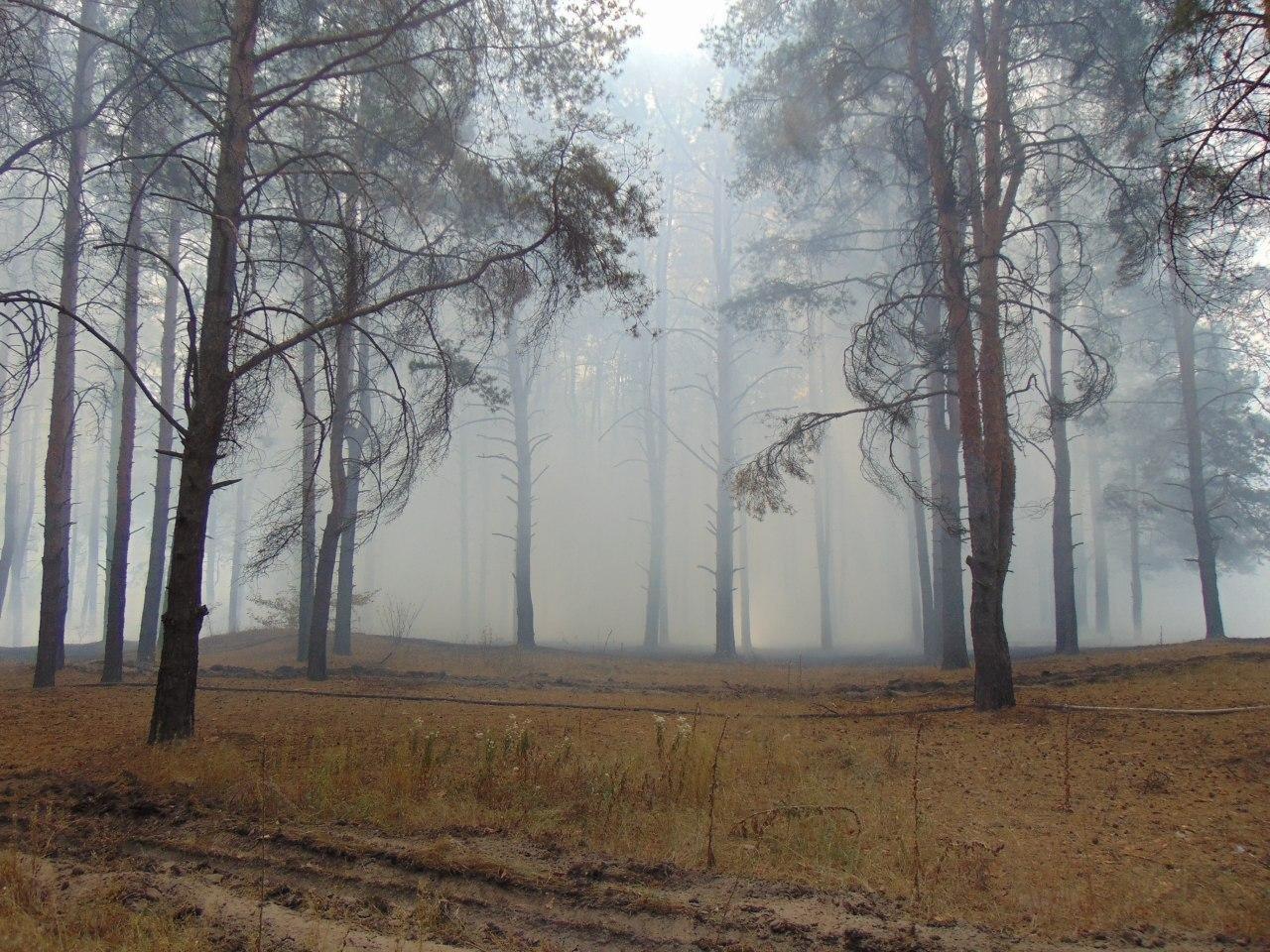 Лесной пожар под Северодонецком: спасатели эвакуируют жителей сел , фото-2