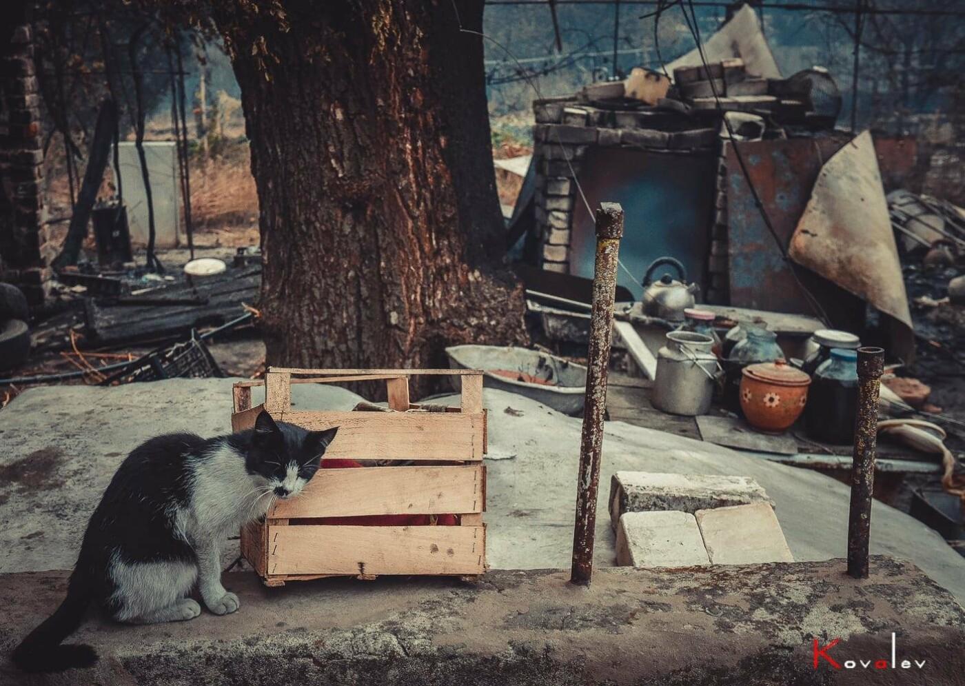 Маячат на пепелищах: как на Луганщине спасают животных пострадавших во время пожара , фото-1
