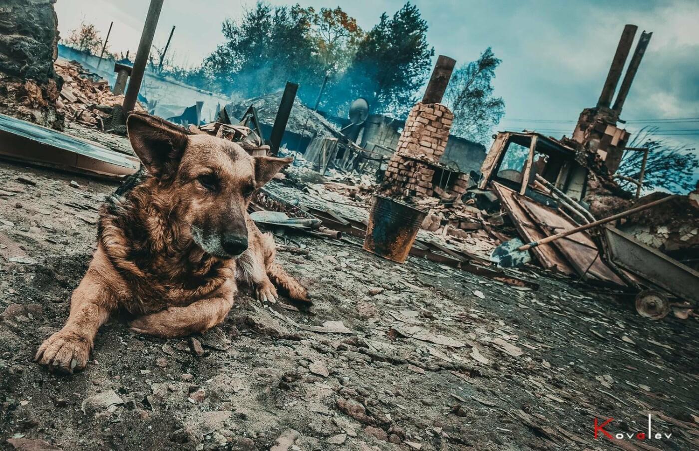 Маячат на пепелищах: как на Луганщине спасают животных пострадавших во время пожара , фото-2