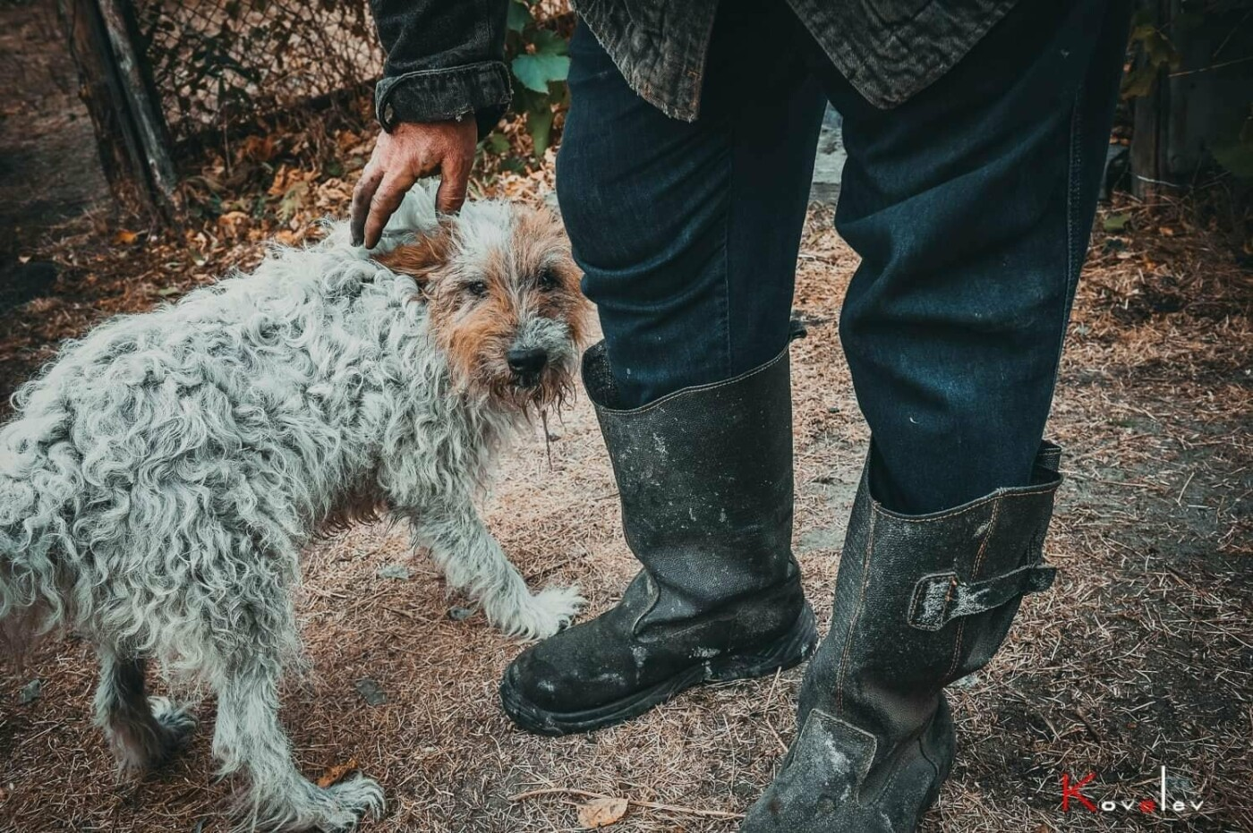 Маячат на пепелищах: как на Луганщине спасают животных пострадавших во время пожара , фото-3