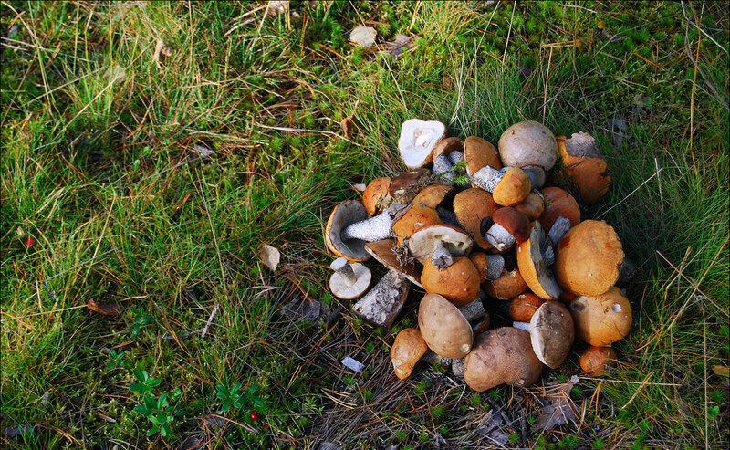 Грибной сезон: где, когда и как лучше собирать грибы, фото-2