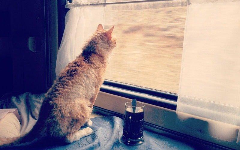 Путешествие с животными: как северодончанам перевезти питомца в поезде и автобусе, фото-1