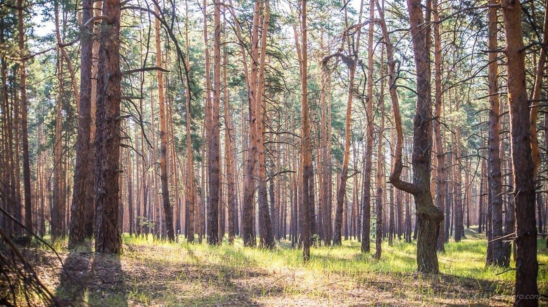 Интересные факты о Луганщине, которые вы могли не знать. Часть 2, фото-8