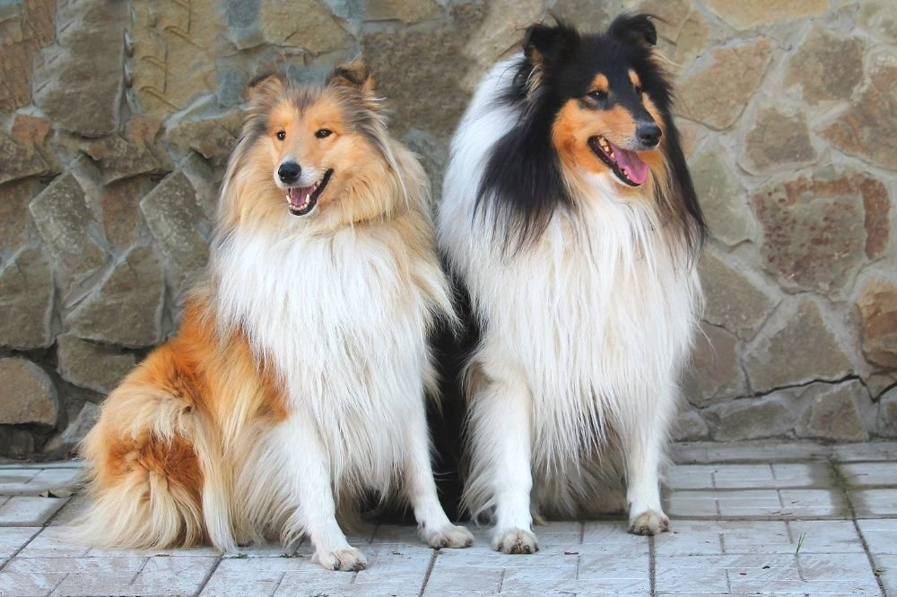 С Новым другом! Топ-10 дорогих животных Северодонецка, которые выставлены на продажу, фото-7
