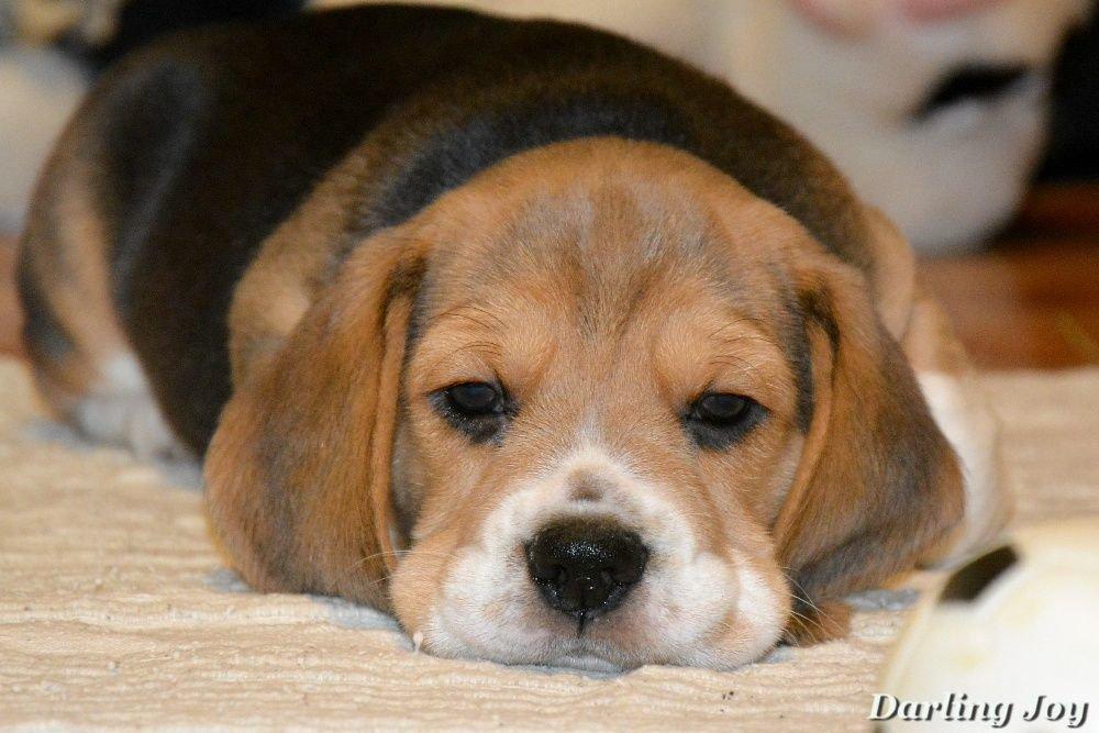 С Новым другом! Топ-10 дорогих животных Северодонецка, которые выставлены на продажу, фото-3