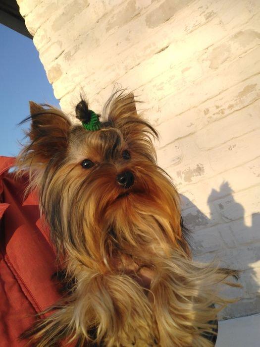 С Новым другом! Топ-10 дорогих животных Северодонецка, которые выставлены на продажу, фото-6