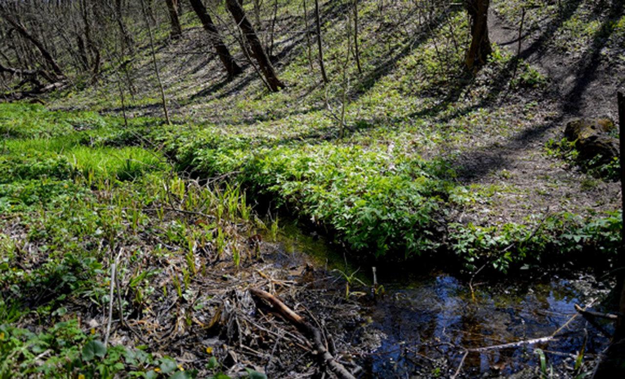 Родники Луганщины: 13 мест, где можно набрать чистой воды, фото-7