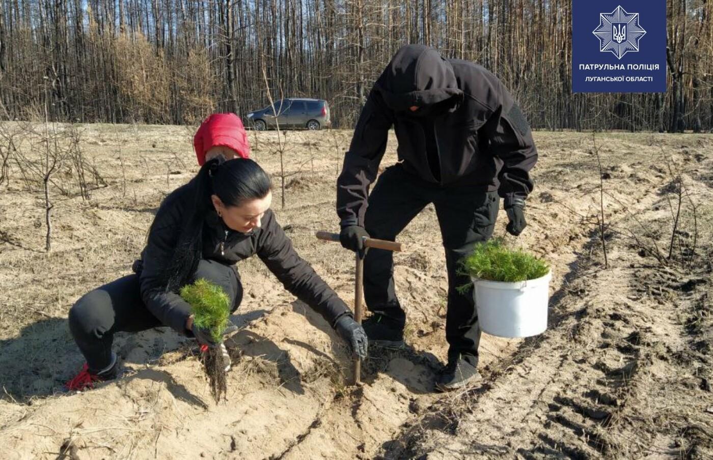 Озеленение Луганщины: более 20 тысяч саженцев сосны высадили активисты , фото-1