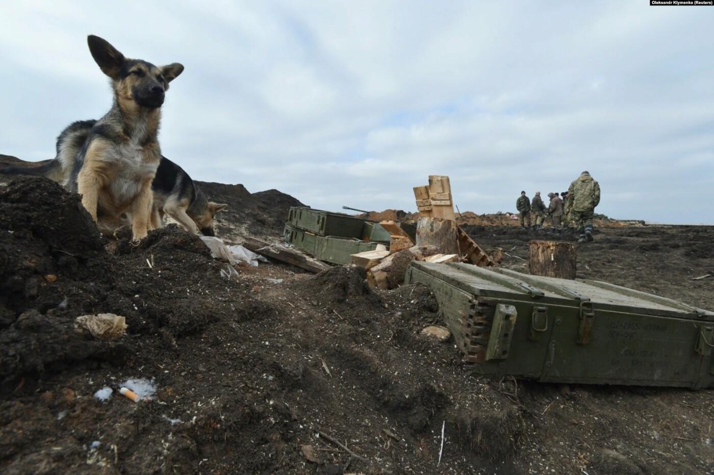 Преданные спутники: военным на Донбассе помогают четвероногие друзья (фото), фото-6
