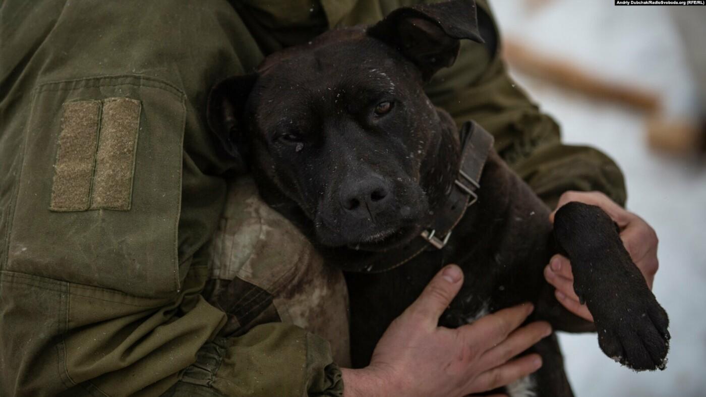Преданные спутники: военным на Донбассе помогают четвероногие друзья (фото), фото-2
