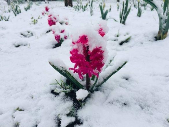 В Украине выпал снег: какая погода ждёт жителей Луганской области, фото-1