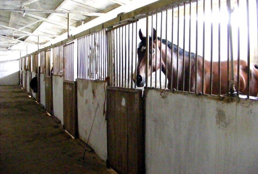 Верхом на коне: где северодончане могут покататься на лошадях, фото-6