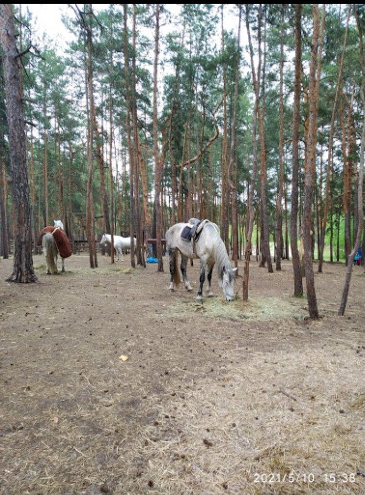 Верхом на коне: где северодончане могут покататься на лошадях, фото-1