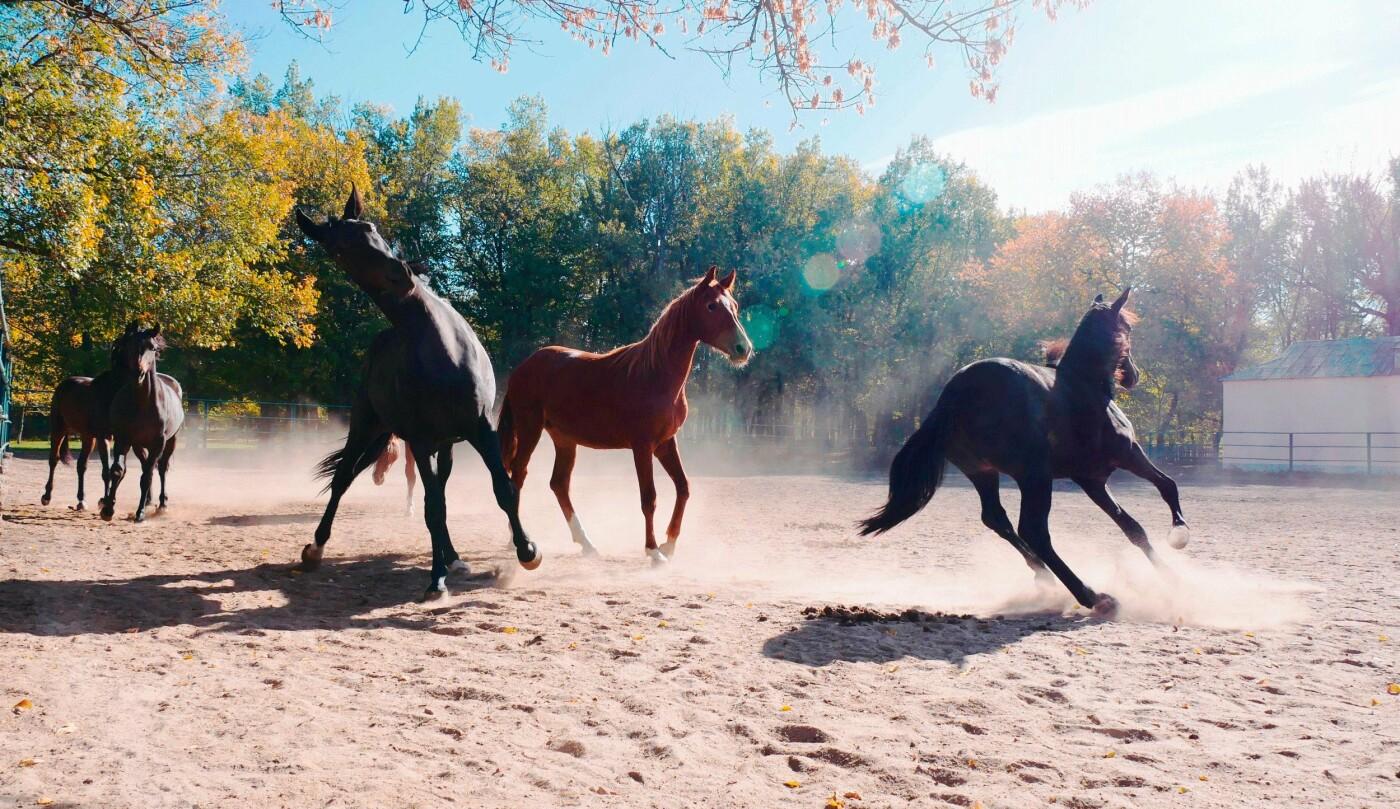 Верхом на коне: где северодончане могут покататься на лошадях, фото-3